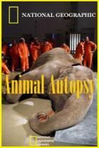 National Geographic: Анатомия крупнейших животных