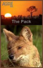 Animal Planet. Стая. Красные волки