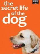 BBC. Тайная жизнь собак