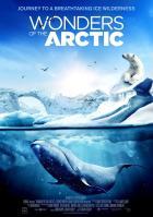 Чудеса Арктики