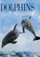 Дельфины скрытой камерой