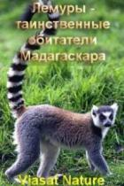 Лемуры - таинственные обитатели Мадагаскара