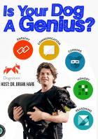 Насколько умна Ваша собака?
