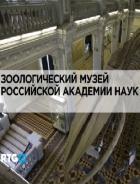 RTG. Зоологический музей Российской академии наук