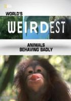 Самые странные в мире: Животные-хулиганы