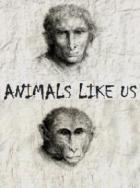 Животные похожи на нас