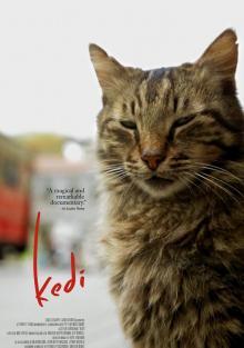 Город кошек, 2016