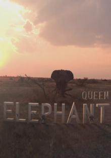 Королева слонов, 2014