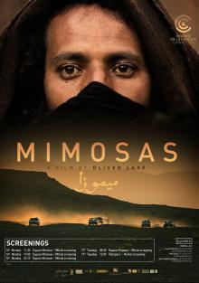 Мимозы, 2016