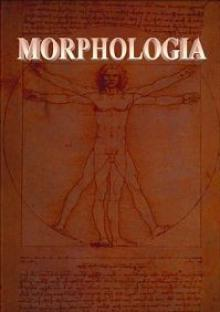 Морфология, 2013
