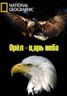 Орёл – царь неба, 2014