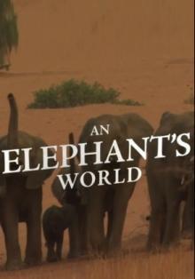 Почти человек: жизнь слона, 2017