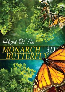 Полет бабочки, 2012