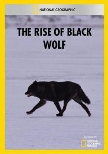 Восхождение черного волка, 2010