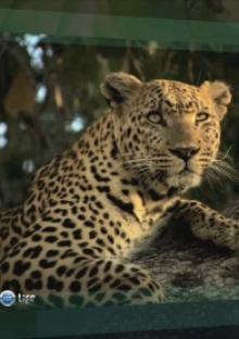 Живая природа: прямой репортаж, 2009